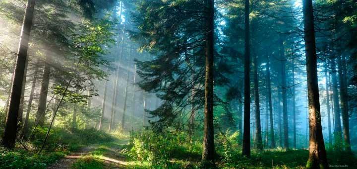 сонник, лес во сне